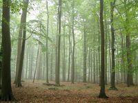 Sachsenwald 3