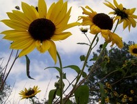 Flourshing flowers