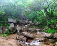 Mountain creek in a mist