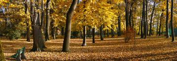 autumn park 2