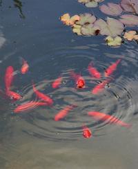 The inquiring fish