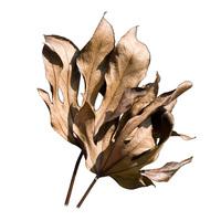 Tree Leaves 3