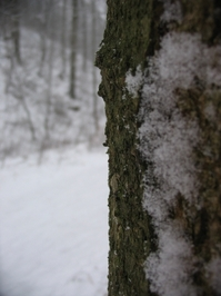 winterscape 3