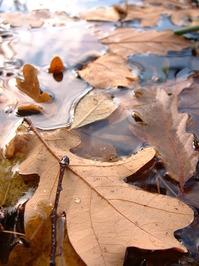"leaf "" us alone"