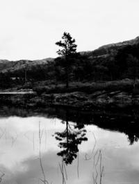 fir by water