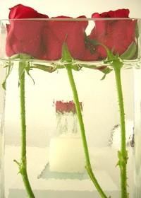 red rose 5