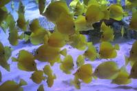 yellow fish pattern