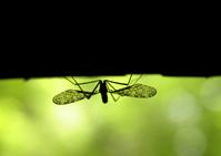 night's bug