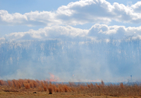 Preventing Forest Fires 2