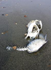 ex fish