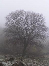 cres tree 3