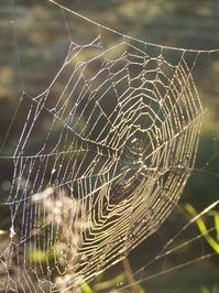 searchin' the web 2