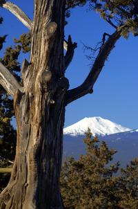 Snow-Capped Peaks 3