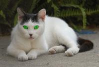 Cat green