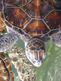 Turtle Farm 3