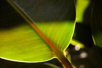 Green Backlight