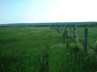 Green Field 1