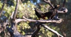 Amazonian bird 2