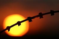 sunset & fence 32