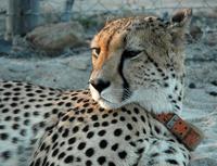 Nkosi Sikelel'i Africa #1