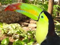 Uncle Tucan's Beak