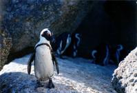Flirty penguin