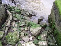 seaweed in harbour2