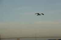 Alcatraz Island 29