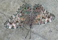 flutterbys 2