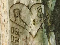 tree rind, love