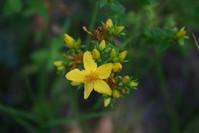 wild flowers 14