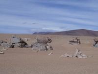 Stone desert 1