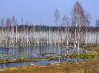 The Belarus bog