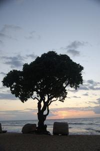 Hawai'i Beaches 11