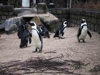penguin in zoo 3