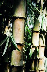 bamboo thai 1