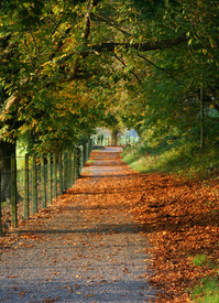 Autumn way 2