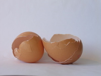 Egg shell 1