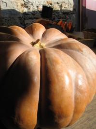 A pumpkin at the market 2