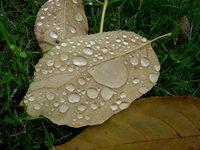 automn's rain