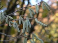 autumn0 3