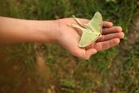 Green Moth 2