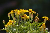Flowers zoom