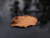 Leaf on a black pawn