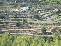Terracing in Spain