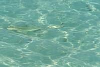 Baby sharks 2