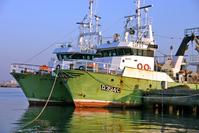 fish boats 7