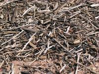 Lakeside Driftwood