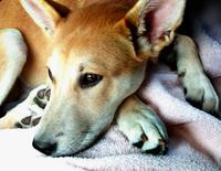 Portrait of a Pup 1