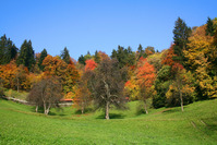 Autumn arrived 2